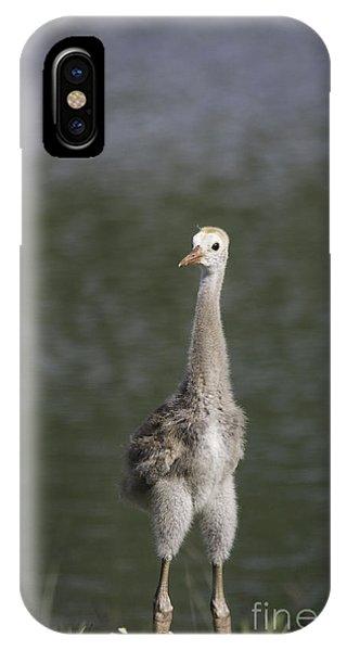 Baby Sandhill Crane IPhone Case