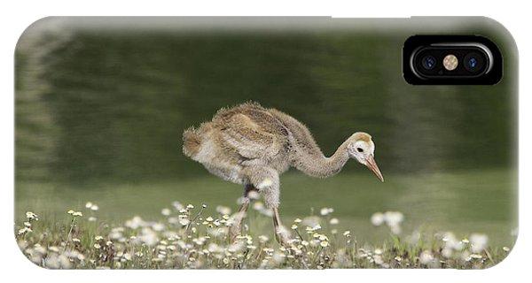 Baby Sandhill Crane Walking Through Wildflowers IPhone Case