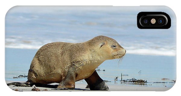 Baby Sea Lion On Seals Bay IPhone Case