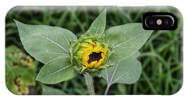 Baby Sunflower  IPhone Case