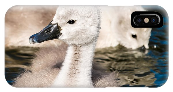 Baby Swan Close Up IPhone Case