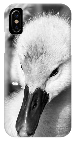 Baby Swan Headshot IPhone Case