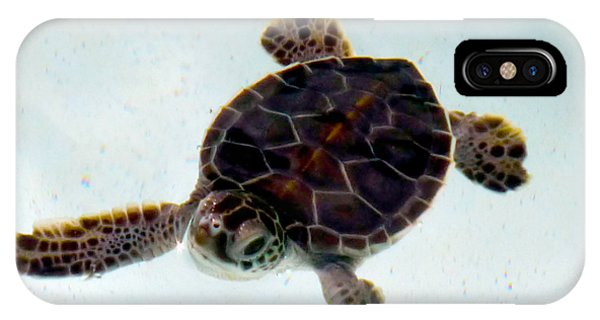 IPhone Case featuring the photograph Baby Turtle by Francesca Mackenney