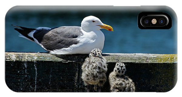 Baby Western Gulls With Mom IPhone Case