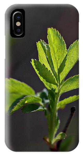 Back Lit IPhone Case