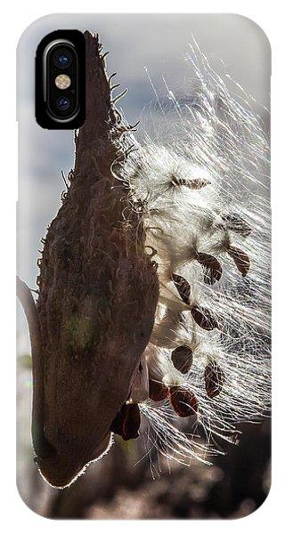 Back Lit Milkweed Pod IPhone Case