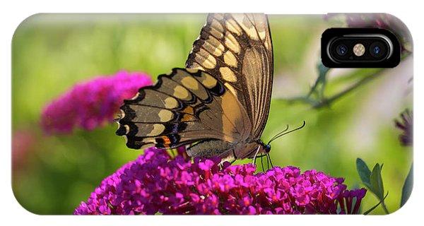 Back-lit Papilio IPhone Case