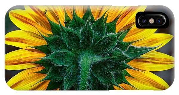 Back Of Sunflower IPhone Case