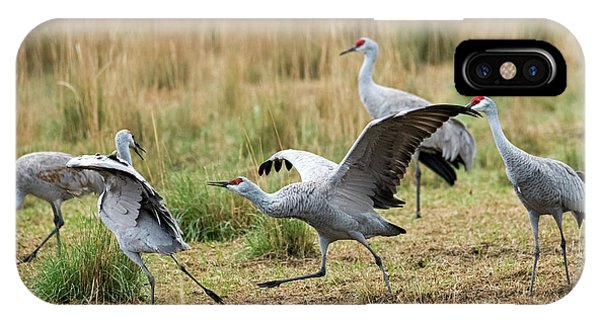 Sandhill Crane iPhone Case - Back Off by Mike Dawson