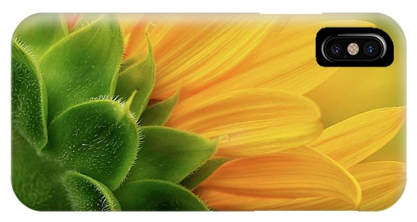 Back View Of Sunflower IPhone Case