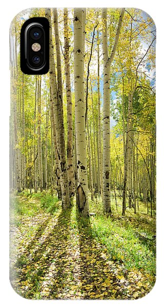 Backlit Aspen Trail IPhone Case
