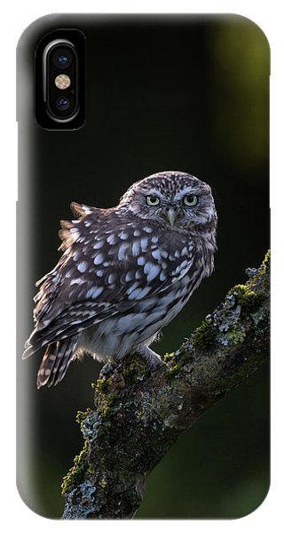 Backlit Little Owl IPhone Case
