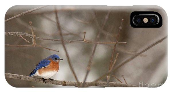 Backyard Blue IPhone Case