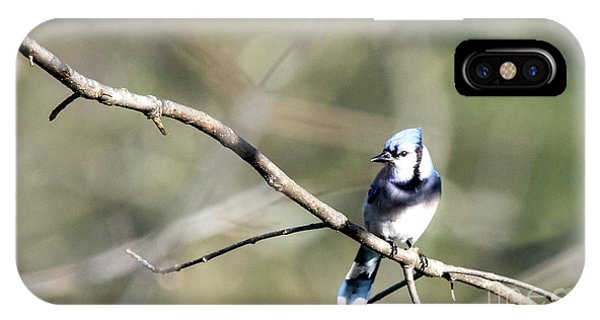 Backyard Blue Jay IPhone Case