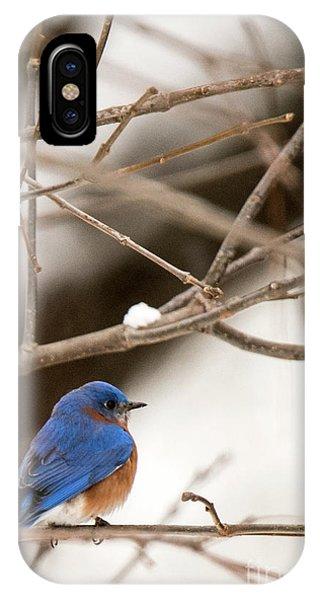 Backyard Bluebird IPhone Case