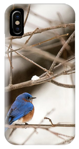 Backyard Bluebird IPhone Case