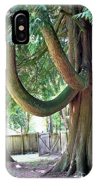 Backyard Cedar IPhone Case