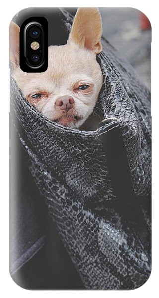 Chihuahua iPhone Case - Bagged by Laurie Search