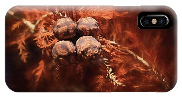 Bald Cypress iPhone Case - Bald Cypress Cones by Donna Kennedy
