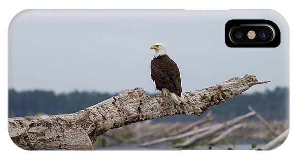 Bald Eagle #1 IPhone Case