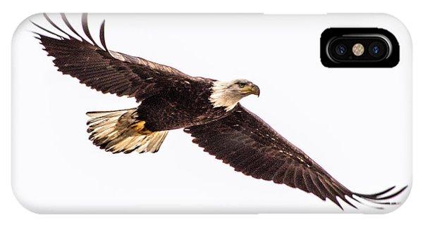 Bald Eagle 2 IPhone Case