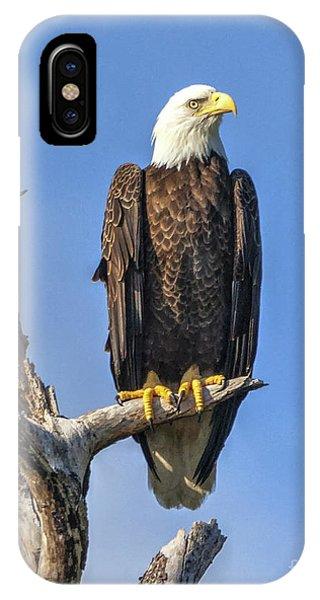 Bald Eagle 6366 IPhone Case