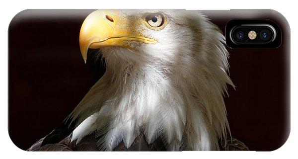 Bald Eagle Closeup Portrait IPhone Case