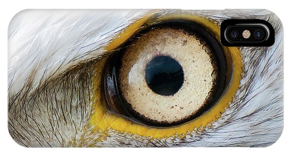 Bald Eagle Eye IPhone Case