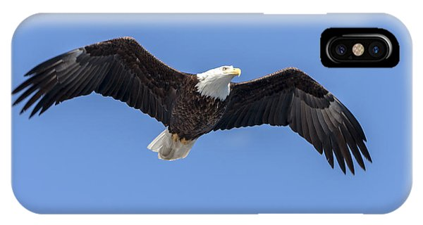 Bald Eagle Flight 1 IPhone Case