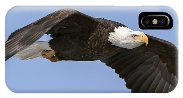 Bald Eagle Flight 2 IPhone Case
