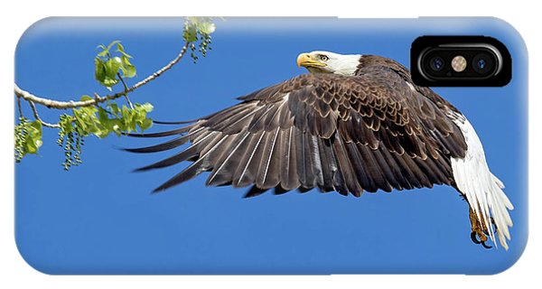 Bald Eagle In Flight 4-25-17 IPhone Case