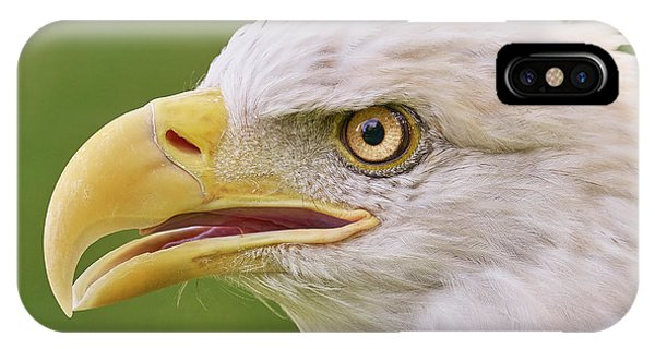 Bald Eagle In Profile IPhone Case