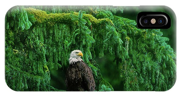 IPhone Case featuring the photograph Bald Eagle In Temperate Rainforest Alaska Endangered Species by Dave Welling