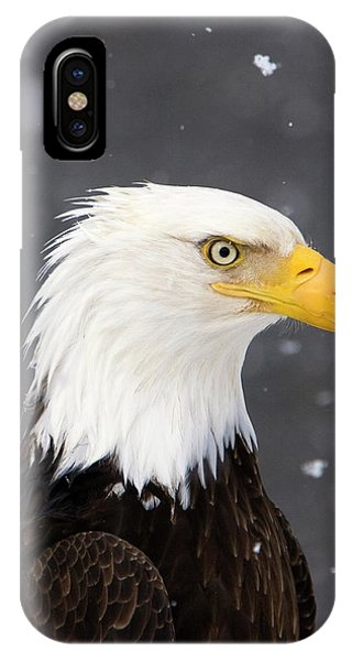 Bald Eagle Intensity IPhone Case