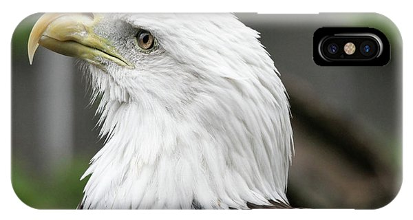 IPhone Case featuring the photograph Bald Eagle by Jackson Pearson