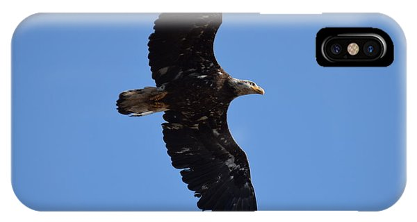 Bald Eagle Juvenile Soaring IPhone Case
