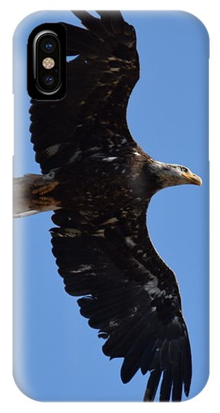 IPhone Case featuring the photograph Bald Eagle Juvenile Soaring by Margarethe Binkley