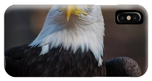 Bald Eagle Looking Right IPhone Case