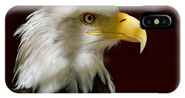 Bald Eagle - Majestic Portrait IPhone Case