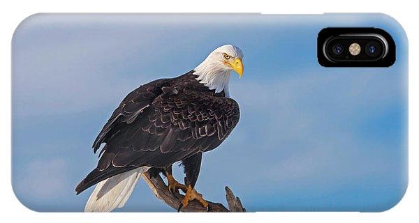 Bald Eagle Majesty IPhone Case