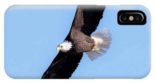 Bald Eagle Overhead  IPhone Case