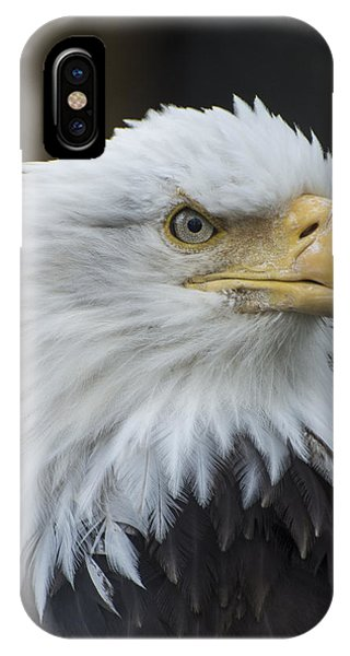 IPhone Case featuring the photograph Bald Eagle Portrait by Gary Lengyel
