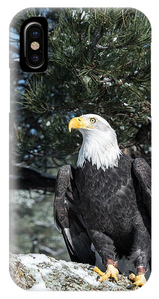 Bald Eagle Ready For Flight IPhone Case