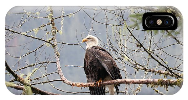 Bald Eagle Resting IPhone Case