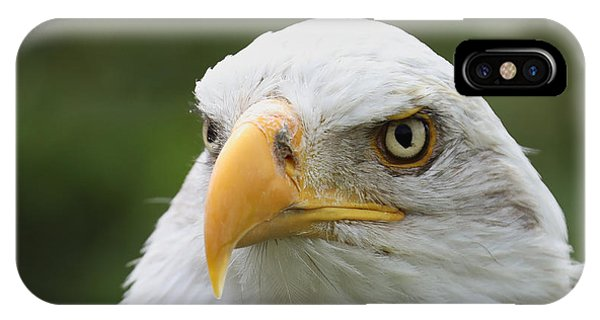 Bald Eagle Slick Back IPhone Case