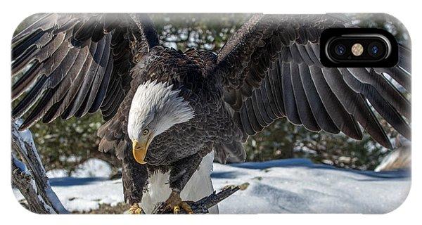 Bald Eagle Spread IPhone Case