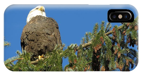Bald Eagle Sunbathing IPhone Case