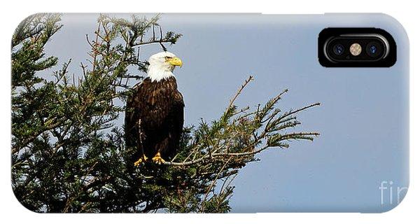 Bald Eagle - Taking A Break IPhone Case