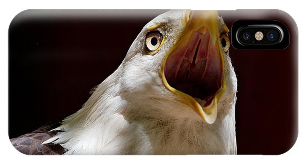Bald Eagle - The Great Call IPhone Case