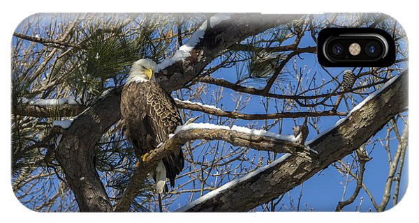 Bald Eagle Watching Her Domain IPhone Case